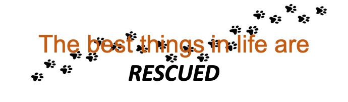 Best things in life are rescued