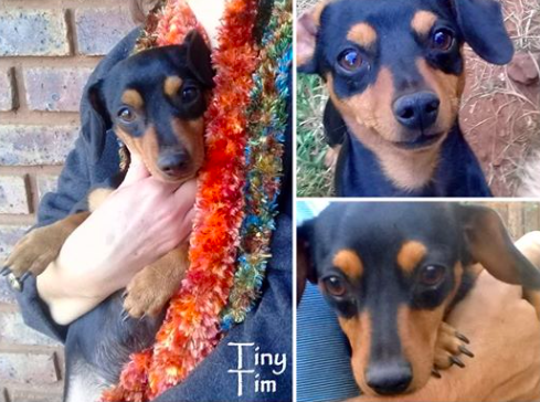 Happy Tails - Dachshunds in Need in South Africa