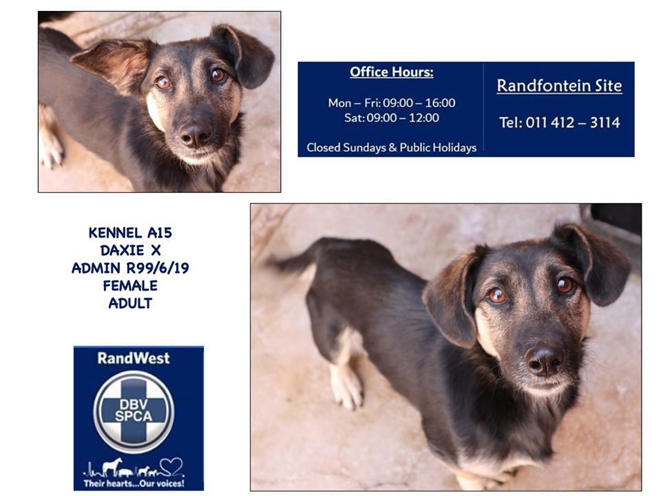 Johannesburg - Dachshunds in need in South Africa