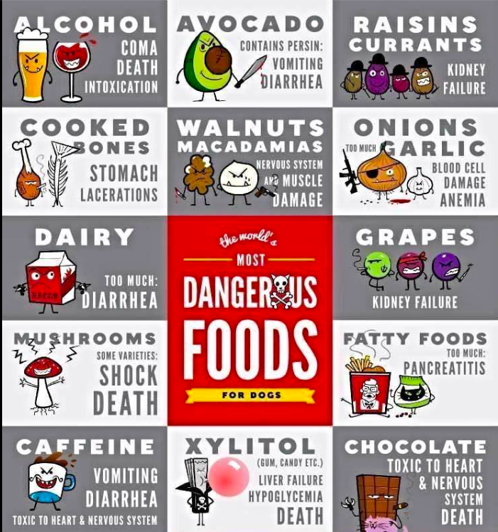 Dangerous foods for pets – AVOID at all costs