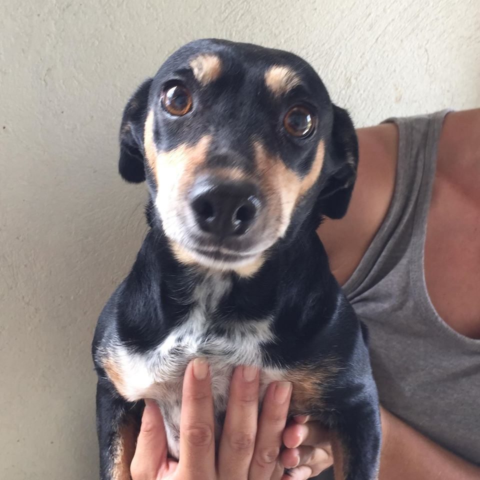 Mpumalanga - Dachshunds in need in South Africa
