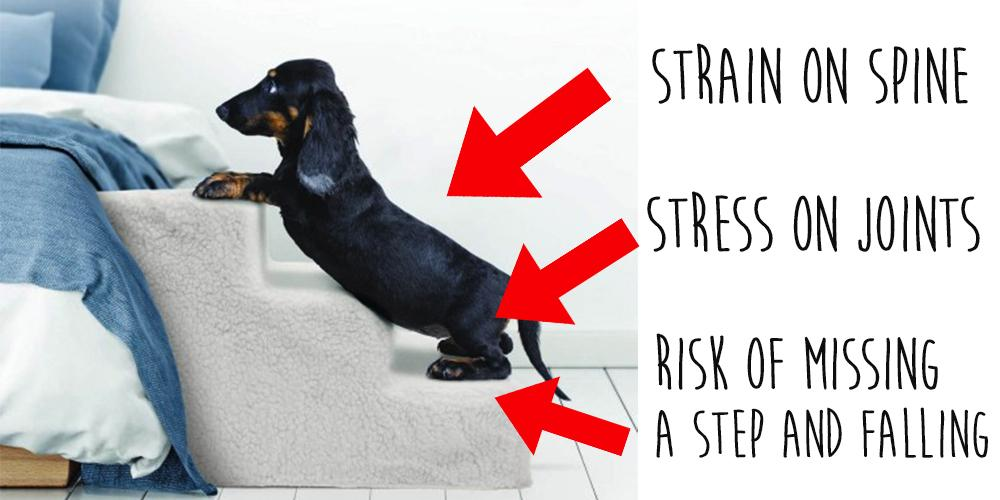 Teaching your dog to use a ramp or stairs