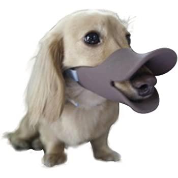 Should my pup wear a muzzle