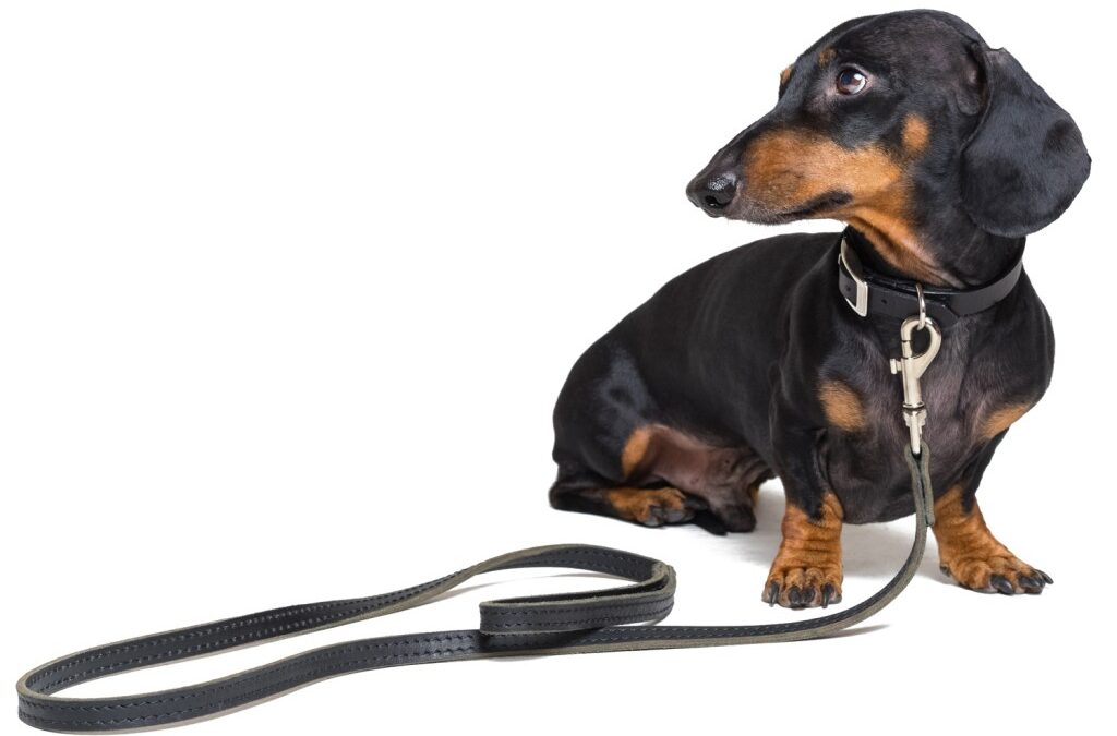 Take The Lead, Safely! Leash Walking Skills Every Human Needs to Know