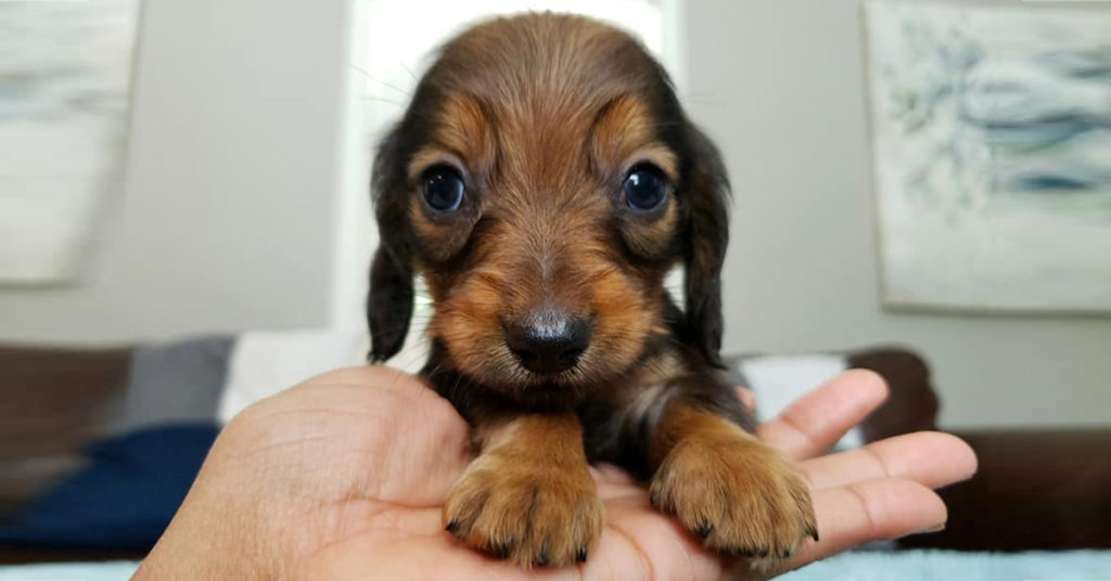 Preparing for your puppy's arrival