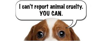 How to report cruelty!