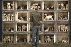 Some Common Problems Found in Pups from Puppy Farming