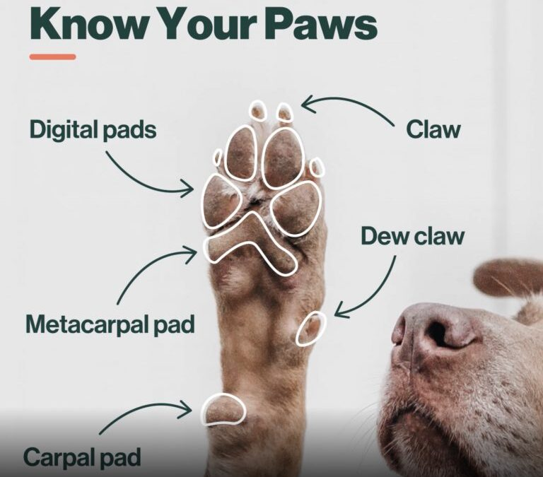 Dew Claws – What you may not know