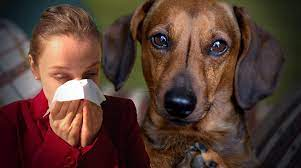 Allergic to dogs? – There may be a solution!