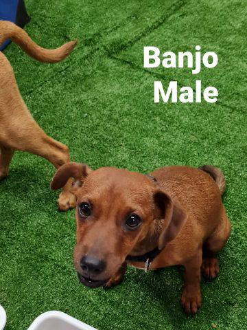 Banjo 4Sep
