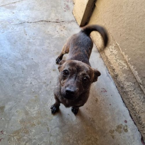 This tiny little cutie waiting in hope -please visit 🙁