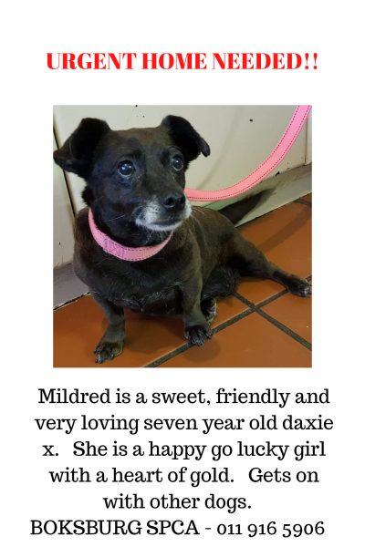 Boksburg Mildred 22Jan