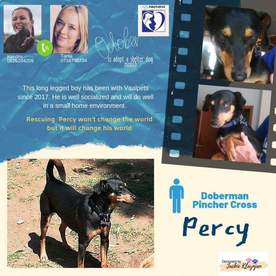 Percy 4